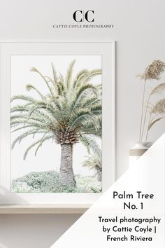 Canary Island date palm on the French Riviera, just outside of Nice. I love these palm trees, they are so sculptural and timeless in their beauty! Palm Tree Art, Palm Trees, Canary Island Date Palm, Fine Art Photography, Travel Photography, Coastal Wall Art, Green Art, French Riviera, Buy Prints