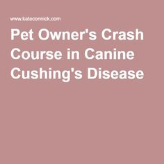 Pet Owner's Crash Course in Canine Cushing's Disease