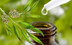 Tea Tree Oil Dandruff Cure