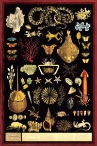 Curiosity Cabinet Poster 24x36 by Feenixx Publishing. Cabinets of natural curiosities were the precursors to modern natural history museums. They were essentially collections, displayed in cabinets, o