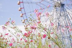 flowers and a ferris wheel