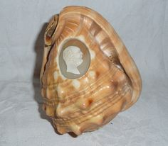 Hand carved CAMEO rare uncut still in shell for shelf display  art by Barndoorfinds on Etsy