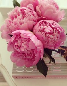 Im thinking peonies are my new favorite flower. love!