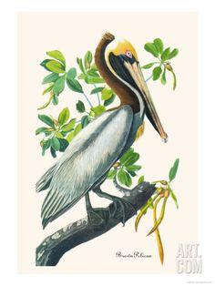 Brown Pelican Premium Poster by John James Audubon at Art.com