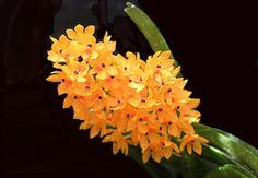 Blumen im Tam Dao Nationalpark in Vinh Phuc, Tuyen Quang, Thai Nguyen Provinze - #AsiaticaReisen