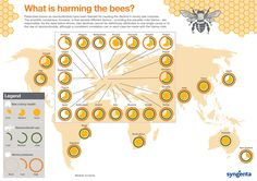 What is harming the bees? Inforgraphic bee decline reasons