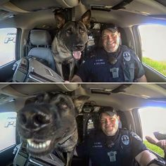 say cheese sandwich please! Military Working Dogs, Military Dogs, Police Dogs, Cute Funny Animals, Funny Animal Pictures, Funny Dogs, I Love Dogs, Cute Dogs, Les Innocents
