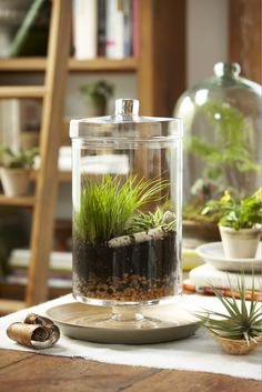 Grass in a terrarium