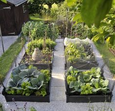This year's Best Edible Garden contest resulted in a tie. Today we profile co-winner Judy Bown of Butleigh, Somerset, in the UK. Her project was chose