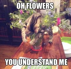 Oh flowers, you understand me.