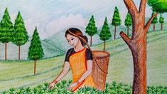 to draw scenery of tea garden step by step How to draw scenery of tea garden step by stepHow to draw scenery of tea garden step by step Scenery Drawing For Kids, Art Drawings For Kids, Easy Drawings, Children Drawing, Oil Pastel Art, Oil Pastel Drawings, Oil Pastels, Pastel Paintings, Save Water Poster Drawing