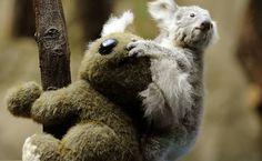 F5 - bichos - Filhote de coala ganha pelúcia em zoo da Alemanha - 27/03/2013