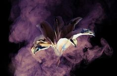 Henry Hargreaves's Smoke and Lily Photography