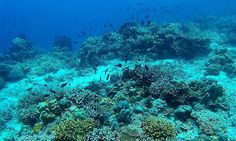 Pro Dive Davao takes you to the reefs situated around the Davao Gulf and Samal island. Explore as a Snorkler, Diver or Intro Diver. Come Scuba Diving in Davao Davao, Fiji, Scuba Diving, Philippines, Aquarium, Boat, River, Island, Explore