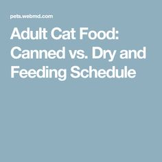 Adult Cat Food: Canned vs. Dry and Feeding Schedule