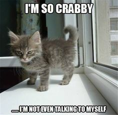 Love Cute Animals shares pics of playful animals, cute baby animals, dogs that stay cute, cute cats and kittens and funny animal images. Funny Animal Memes, Funny Animal Pictures, Funny Animals, Cute Animals, Funny Memes, Funniest Pictures, Hilarious Pictures, Animal Pics, Silly Meme