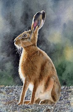 Hare Listening/ A  watercolour by Sylvia Twiss