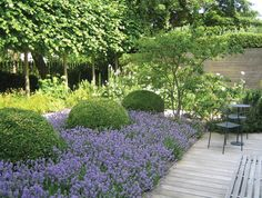 A carpet of lilac against clipped box really works. Jinny Blom garden design