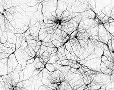 neuron forest - Sök på Google