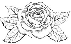 Beautiful rose in the style of black and white engraving. Many similarities in the profile of the artist | Vector | Colourbox on Colourbox