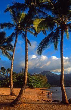 Hanalei Bay Palms, Kauai, Hawaii. Please please please take me back to this wonderful land.