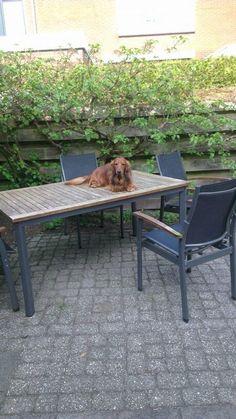 Hoezo, honden horen niet op tafel.....