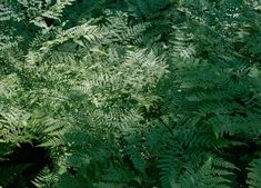 7 Heat-Tolerant Ferns that Love the Sun