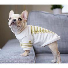 Leo, the French Bulldog Band Leader, @frenchieleo on instagram