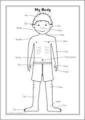 My body labelling sheets (SB8359) - SparkleBox