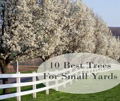 pHere is a look into what might be good for a smaller yard. These trees are really pretty, theyre popular and most have really pretty colors. Most of them grow to be about 20-30 feet in height. 1. Japanese Maple 2. Crabapple 3.Redbud 4. Flowering Dogwood 5. Golden Chain Tree /p