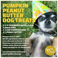 Homemade Pumpkin Peanut Butter Dog Treats - This looks like a really easy diy dog treat recipe. My dogs love peanut butter so I think they will be very happy. I plan to use oat flour instead of wheat flour as a lot of dogs can be sensitive to wheat. Horse Treats, Puppy Treats, Diy Dog Treats, Homemade Dog Treats, Dog Treat Recipes, Peanut Butter Dog Treats, Pumpkin Dog Treats, Dog Cookies, Diy Stuffed Animals
