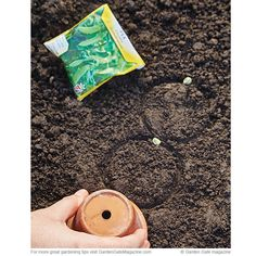 Potager Garden Easy seed spacing To reduce clumping seedlings, and the need to thin, use different-sized pots to measure the distance between plants. - Use this tip to make sowing seeds simpler and save time later on. Vegetable Planting Guide, Planting Vegetables, Unique Plants, Exotic Plants, Edible Garden, Easy Garden, Fruit Garden, Garden Ideas, Growing Seedlings