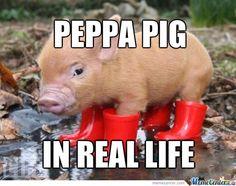 peppa-pig-ha-ha-ha-ha_o_1064272.jpg (538×425)