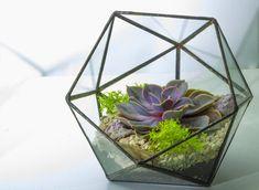 How to make your own terrarium - Westbury Garden Rooms Westbury Gardens, Make Your Own, Make It Yourself, Glass Structure, World Of Interiors, Minion, Indoor Plants, Creative, Green