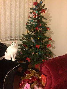 #cats #catloversclub #catlovers #mybabygirl #ChristmasTree