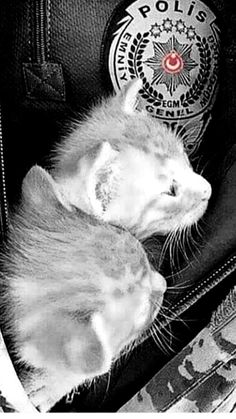 My Animal, Color Splash, My Dream, Military, Cats, Animals, Rage, Gatos, Animales
