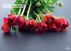 Es una flor muy utilizada en ramos de mano y bouquets. Pero si en algo destaca la utilización de esta preciosa flor es en las bodas. En un ramo de novia aporta un toque elegante, especial y colorido ya que esta flor de tonos vivaces se puede encontrar en varios colores.