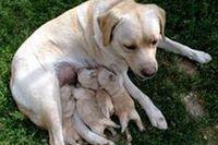 Etapas de desarrollo y cuidados del cachorro