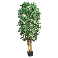 Nearly Natural 5 ft. Schefflera Silk Tree - 5202