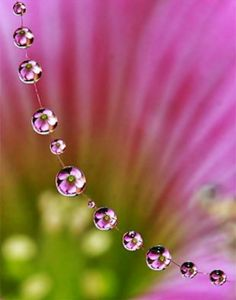 Macro photography - flowers in water droplets.looks like a flower necklace! - Macro photography – flowers in water droplets….looks like a flower necklace! Macro Photography Tips, Water Photography, Amazing Photography, Photography Flowers, Levitation Photography, Exposure Photography, Abstract Photography, Wedding Photography, Macro Fotografie