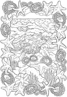 BLISS Seashore Coloring Book: Your Passport to Calm | FREE Printable Page from Dover Publications | Beach Scene | Seashell Collections | Starfish | Ocean Animals | Adult Coloring