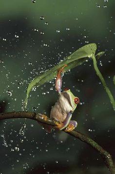 it's raining!!! I don't need this umbrella....