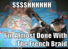 funny cat pictures - SSSSHHHHHH  I'm Almost Done With The French Braid