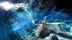 Marisol & Leon's Underwater Trash The Dress in a Cenote - Tulum, Mexico