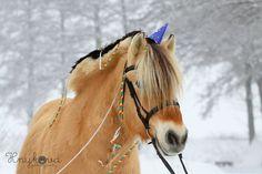 by Aneta Novotná photography My Photos, Horses, Photography, Animals, Photograph, Animales, Animaux, Fotografie, Photoshoot