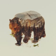 Wild Grizzly Bear Art Print by Andreas Lie