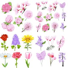 Spring flowers vector templates