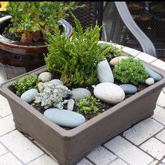 Table top rock garden