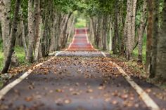 Including certain elements in your landscape photos can help to create intrigue and interest. One option is to capture the landscape surrounding a road. It could be a tree-lined road, a winding mountain road, or a wide open view of a vast landscape. Nature Hd, Nature Tree, Nature Quotes, Editing Background, Background Images, Natural Background, Picsart Background, Blurred Background, Photo Café