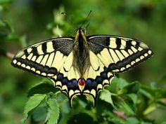 Eugea Store Bruco Lando è un kit per ammirare il processo della metamorfosi della farfalla che da splendido bruco si trasformerà in crisalide e quindi in farfalla colorata.